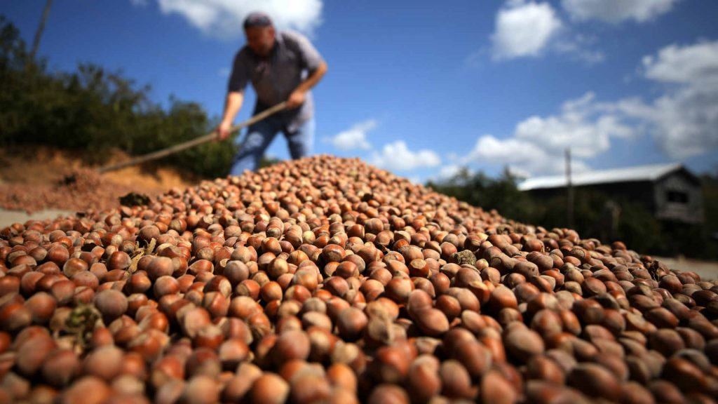 Hazelnut Growers