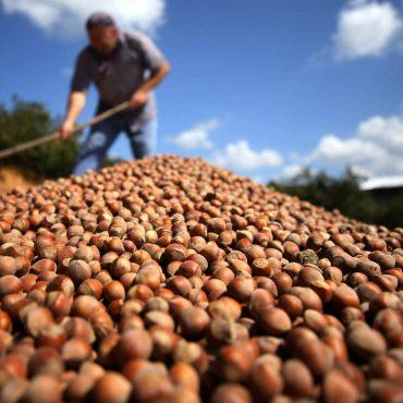 Hazelnuts Benefits For Health