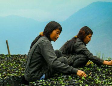 Hazelnut Farming