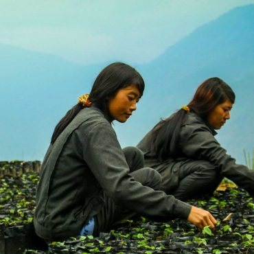 Hazelnut Farming, Cultivation, And Production