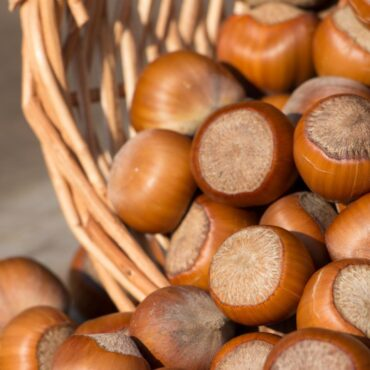 Health Benefits Of Hazel Nuts